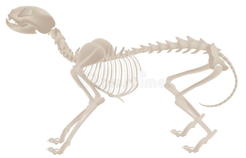 Dog skeleton royalty free illustration