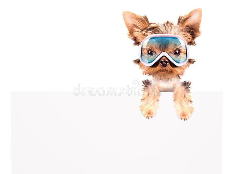 Download Dog With Ski Mask Above Billboard Stock Image - Image: 35710155