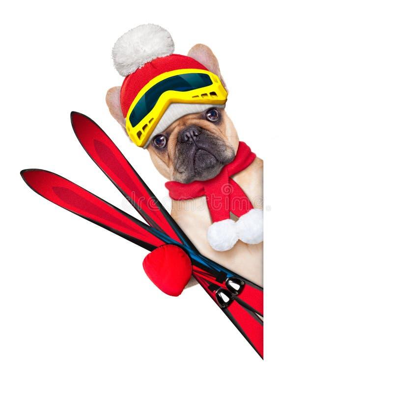 Dog ski winter stock image