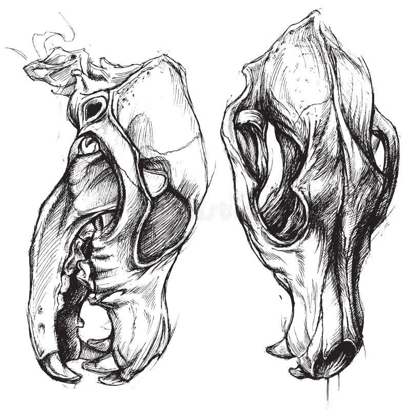 Dog Skull vector illustration