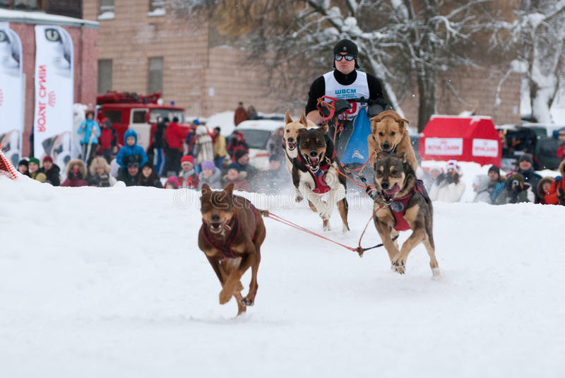 Download Dog sled editorial stock image. Image of action, running - 21336284
