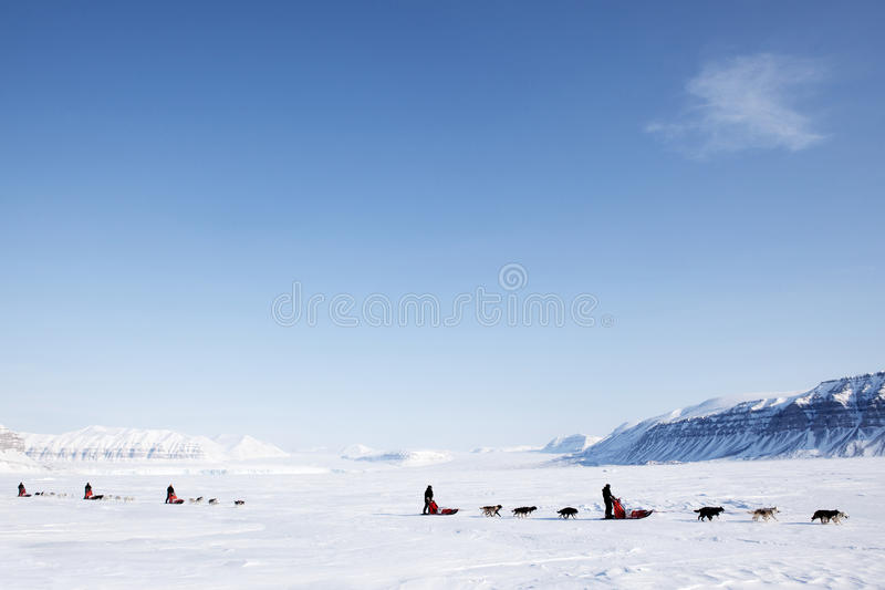 Download Dog Sled stock image. Image of mountain, guide, ecotourism - 9638385