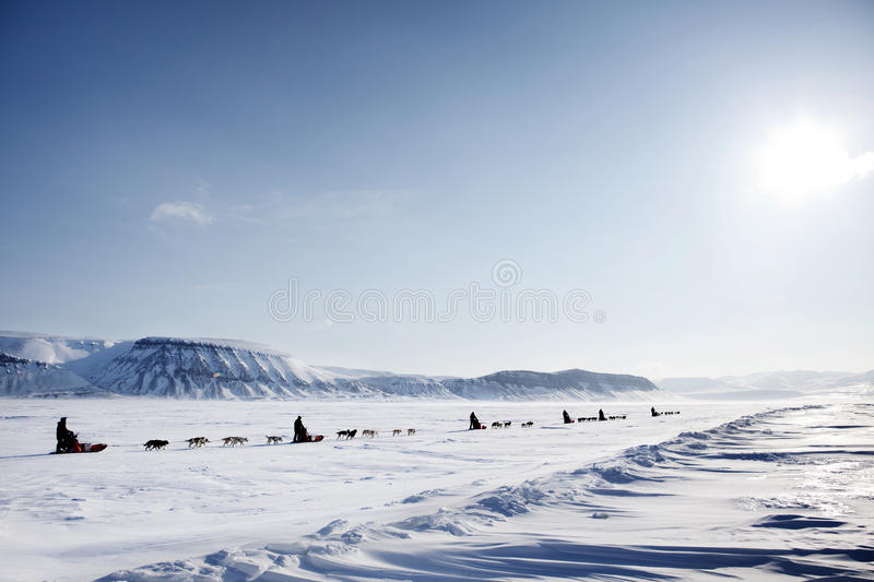 Download Dog Sled Expedition stock photo. Image of mountains, norway - 9634106