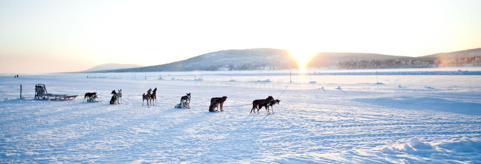 Dog Sledding royaltyfri bild