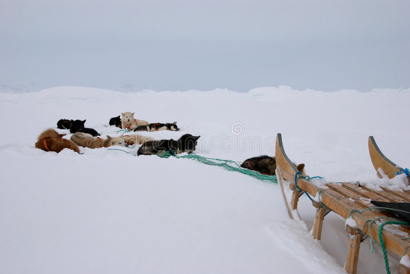 Dog sledge. An inuit dog sledge in the white-out stock photography