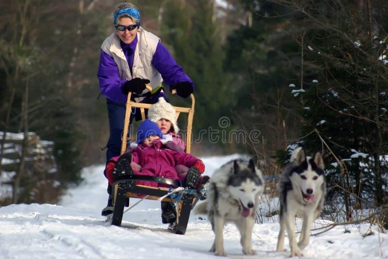 Dog Sledging royalty free stock photography
