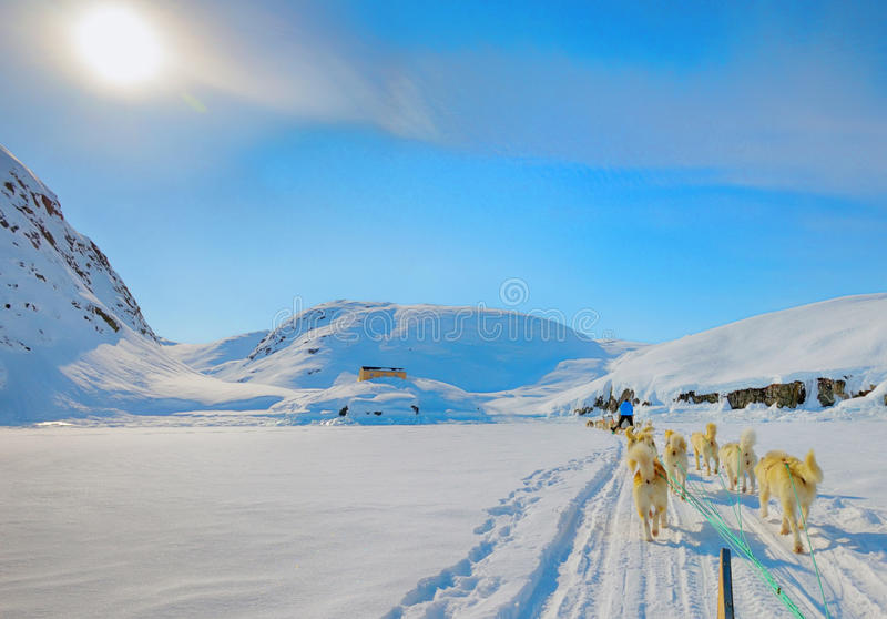 Dog sledging in spring time in greenland. Dog sledding on a wintry Landscape, Arctic North Pole, greenland royalty free stock photos