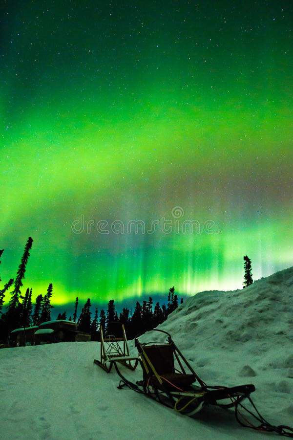 Dog Sleds And Northern Lights. Verticle Composition of Empty Dog Sleds Along Snow Bank With Aurora Borealis Display In Starry Sky royalty free stock photo