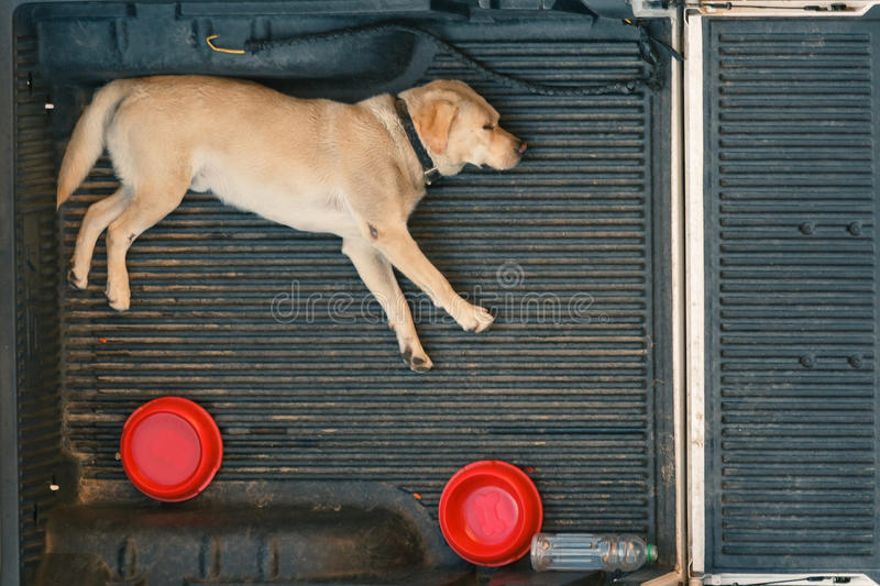 Download A Dog Sleep On The Back Of A Van Stock Photo - Image: 21646112
