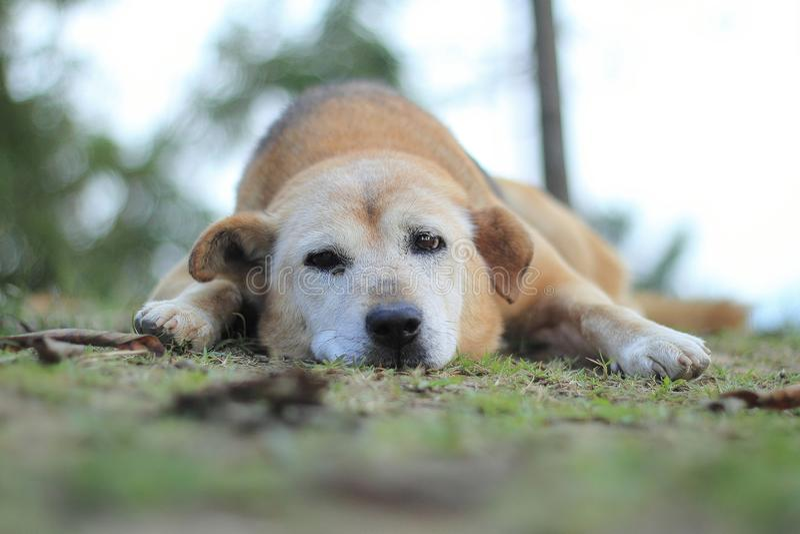 Dog sleep stock photography