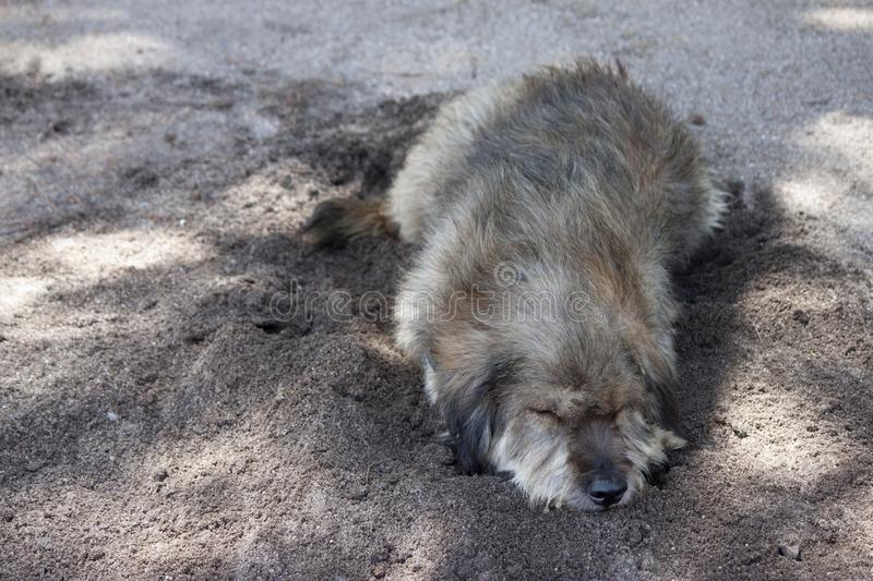 Dog sleep on the sand. stock image