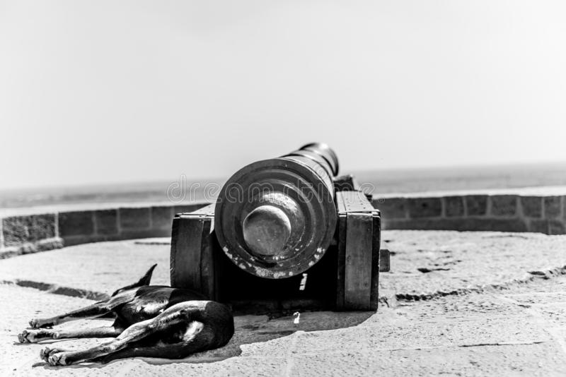 Dog sleeping in the cannon shadow stock image