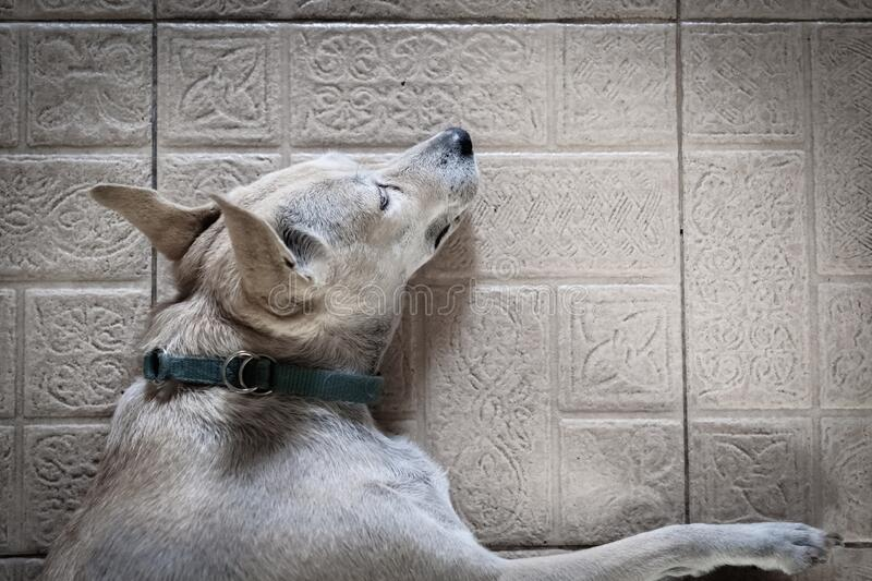 Dog Is Sleeping During The Day Time. Stock Image - Image ...