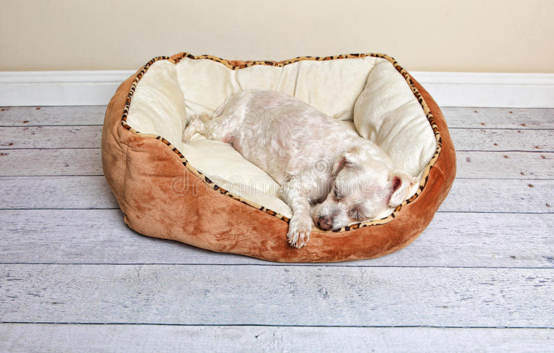 Dog sleeping in a dog bed stock photo