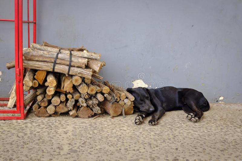 Dog sleeping near wooden stock images