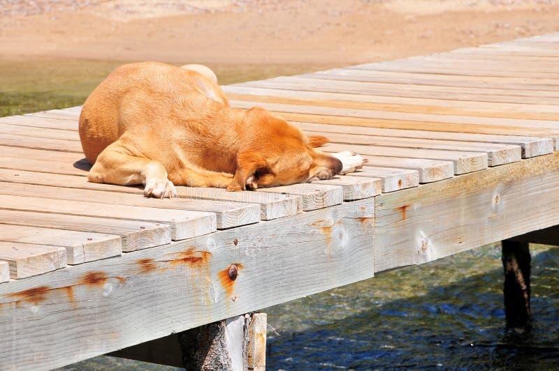 Dog Sleeping On Pier Royalty Free Stock Photography