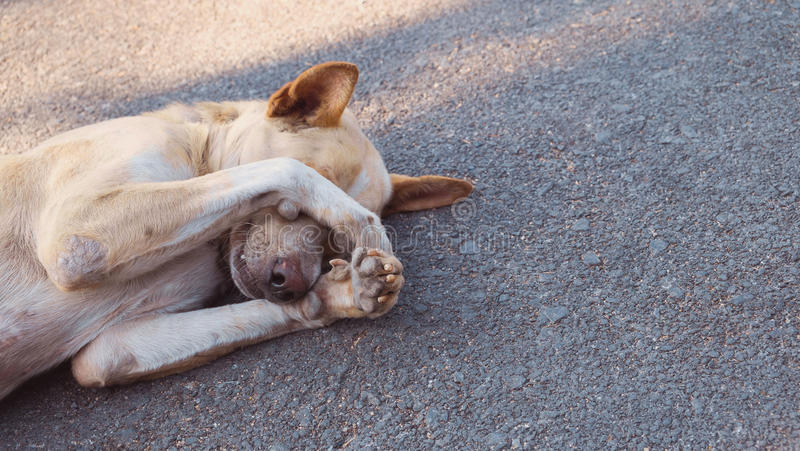 The dog is sleeping on the road, The dog is hiding royalty free stock photography