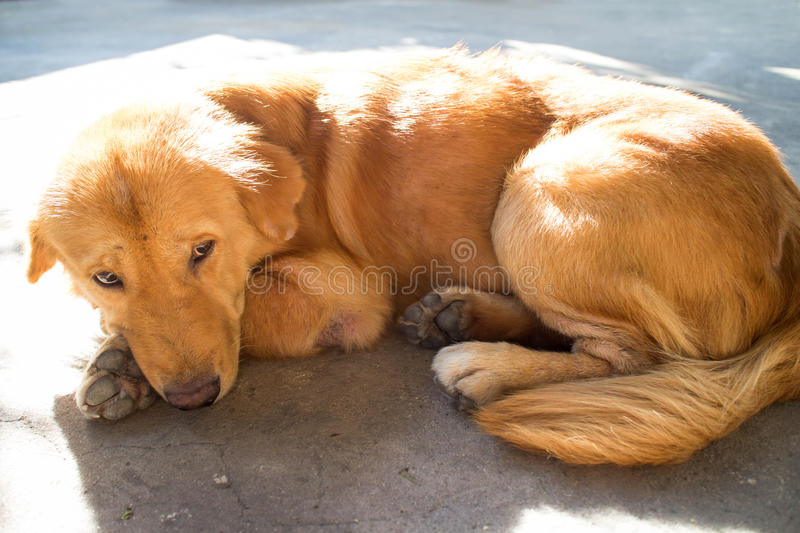 Dog sleeping on the street and sad. royalty free stock photo