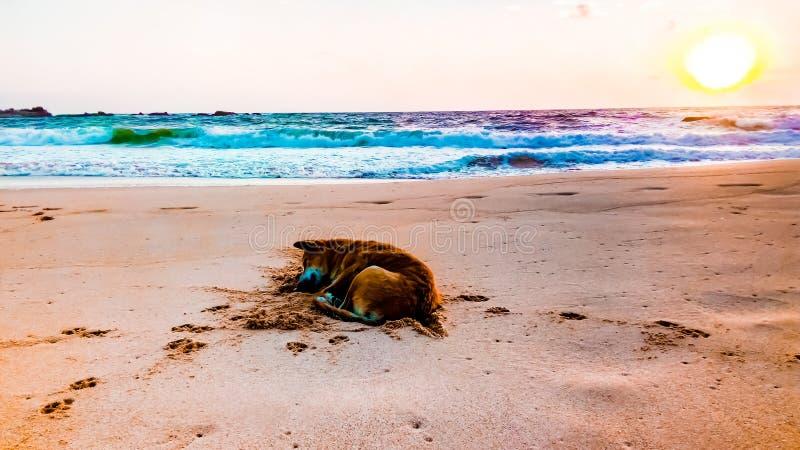 Dog sleeping under the sunset. stock photos