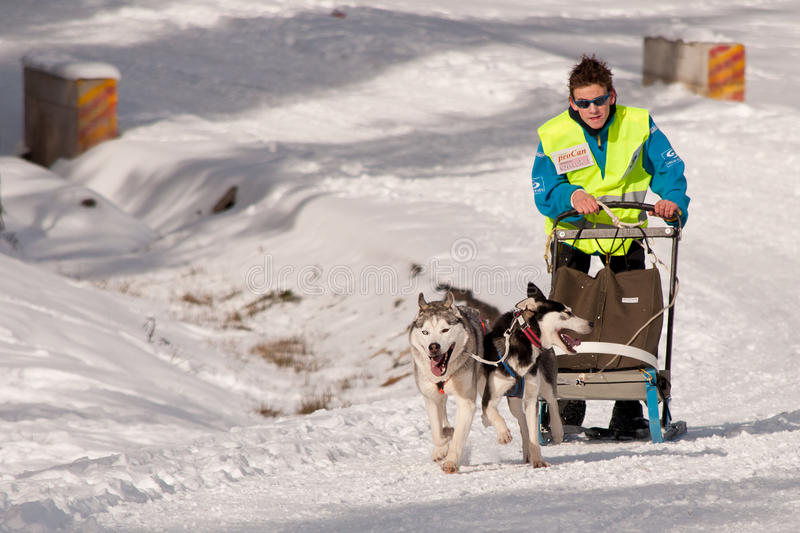 Download Dog Sleigh Racing In Transylvania Editorial Stock Image - Image: 37451269