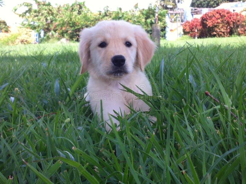 Dog small royalty free stock photo