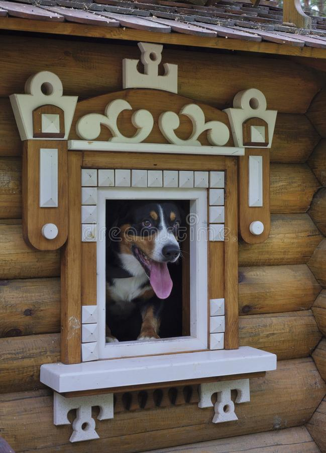 Dog in small wooden house. stock image