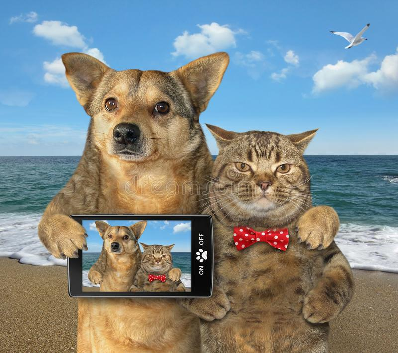 Dog and cat made selfie on the beach stock image