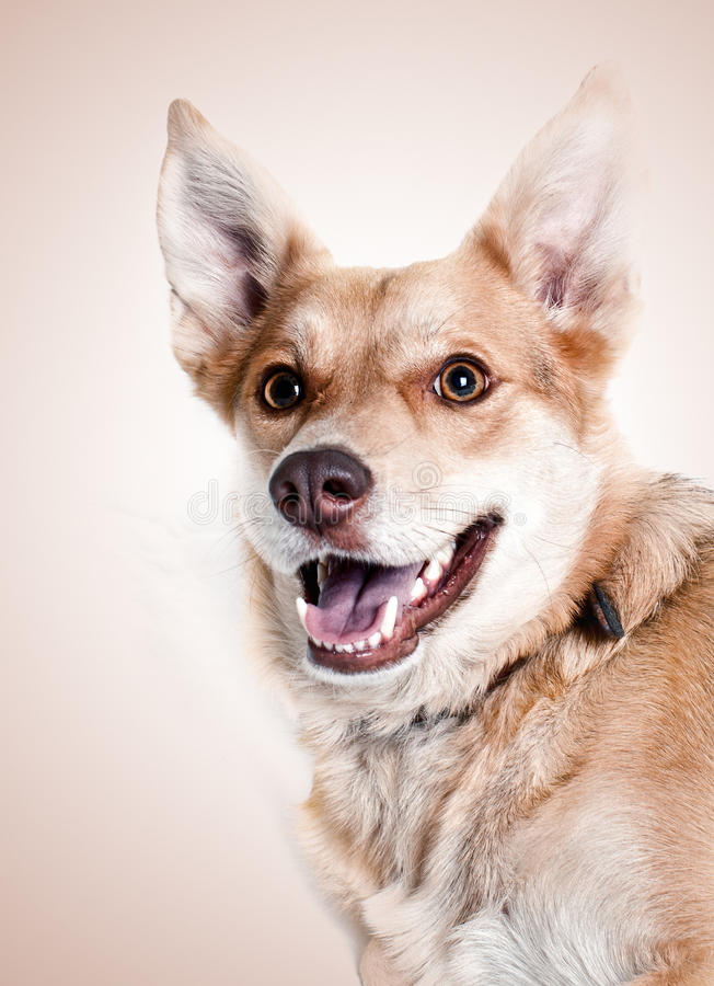 Download Dog smile stock image. Image of shot, background, puppy - 26827675