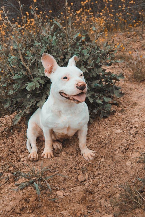 Dog smile. royalty free stock images