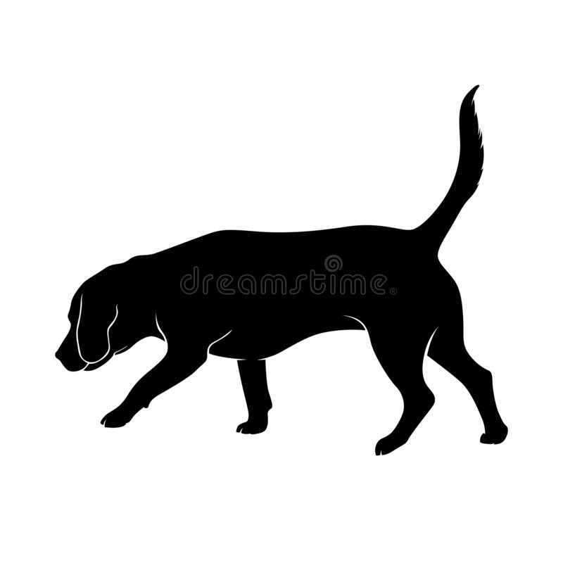 The dog takes the trail. Beagle. Silhouette. The dog is sniffing. The dog is Beagle breed is hear smell. Silhouette. Vector illustration vector illustration