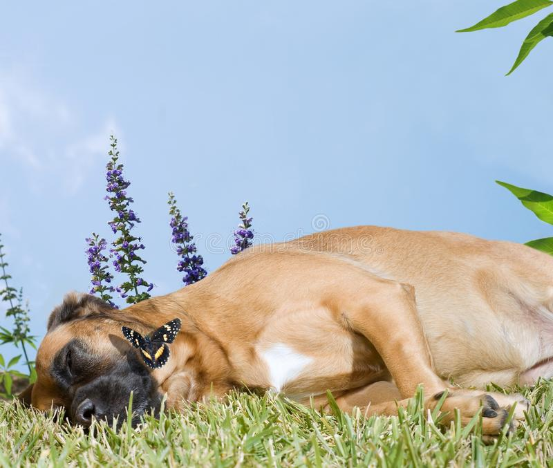 Download Dog Snoozing In A Field Of Flowers Stock Photo - Image: 18075110