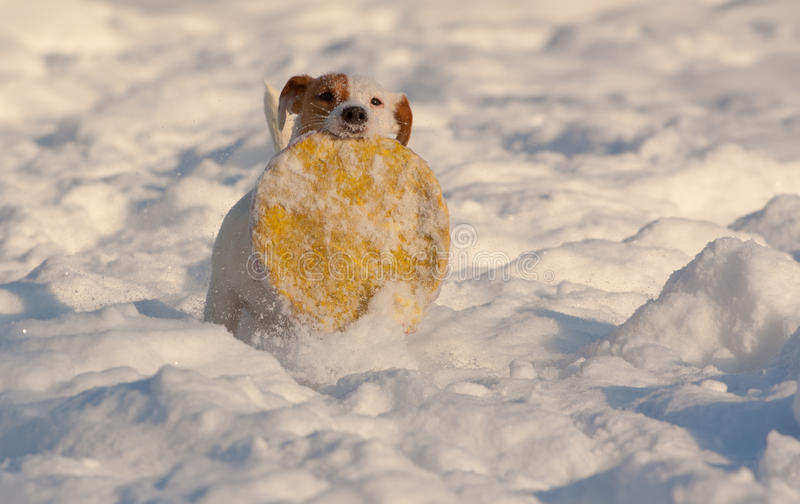 Download Dog in snow stock image. Image of nature, deep, snow - 25189701