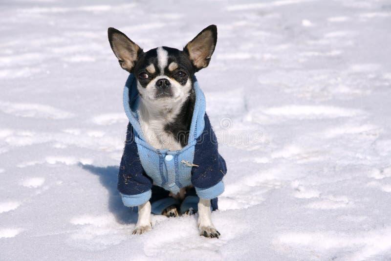 Dog in snow stock image