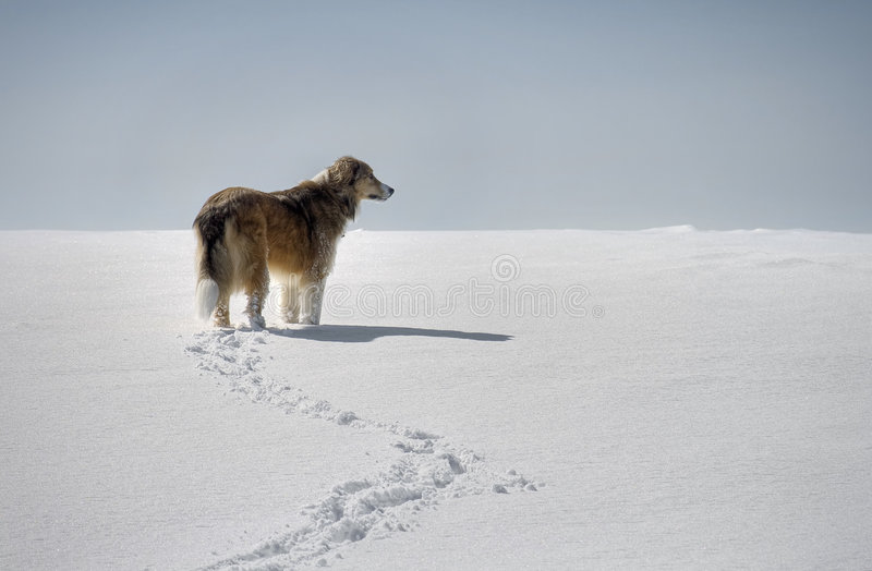 A Dog In The Snow Stock Photo