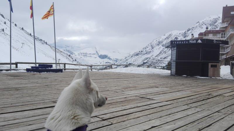 dog snow royaltyfri foto