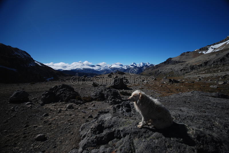 A dog with Snow peaks and mountains in Peru stock photo
