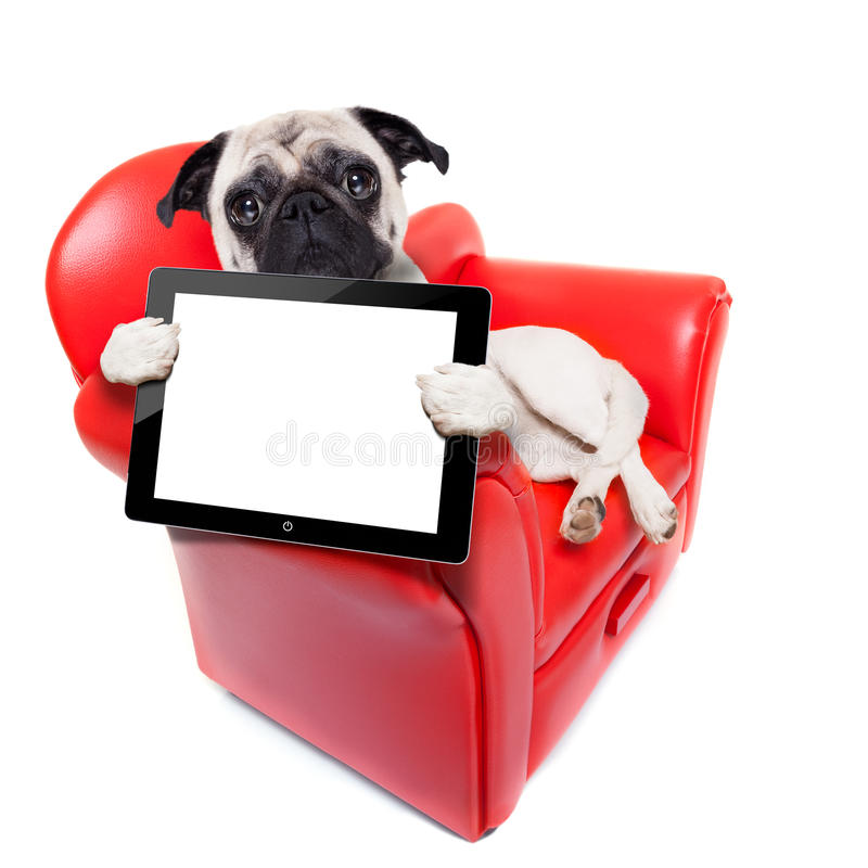 Dog sofa computer royalty free stock images
