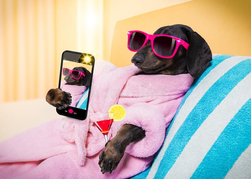 Dog spa σαλόνι wellness στοκ εικόνες