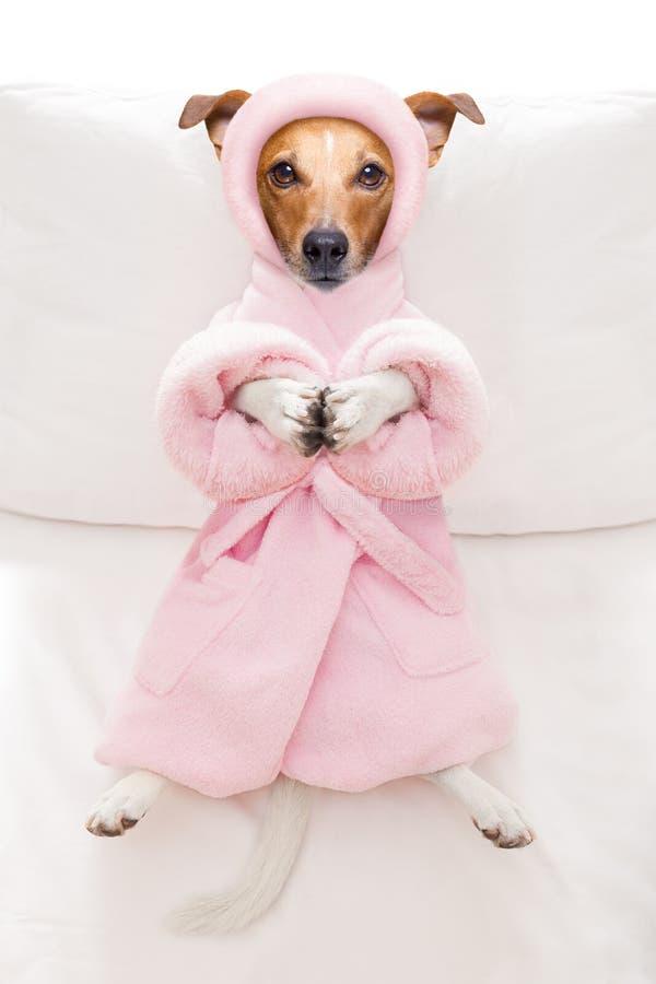 Dog spa σαλόνι wellness στοκ φωτογραφία