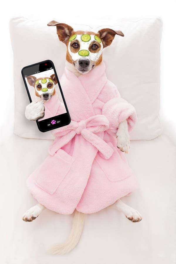 Dog spa wellness royalty-vrije stock afbeelding