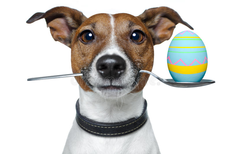 Dog with spoon and easter egg. Dog with easter egg on mouth stock photography