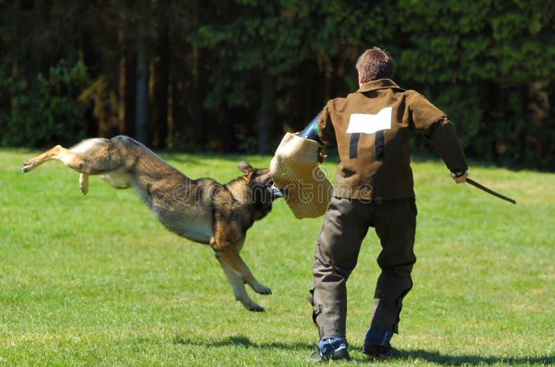 Dog sport stock image