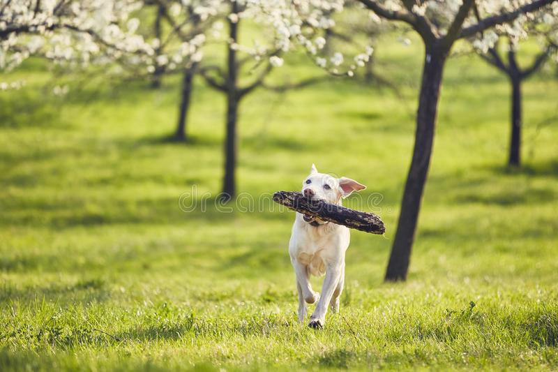 Dog is in spring nature stock photography