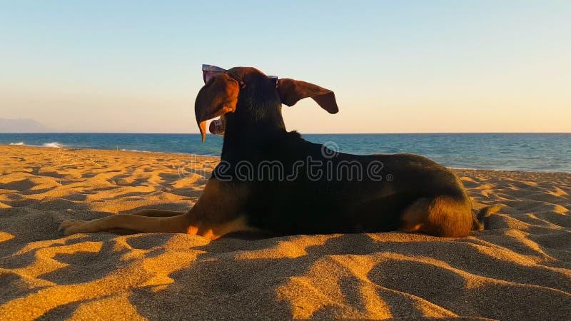 Dog ståenden som ser stranden, medan vinden blåser Ett gulligt ögonblick av att koppla av royaltyfri foto