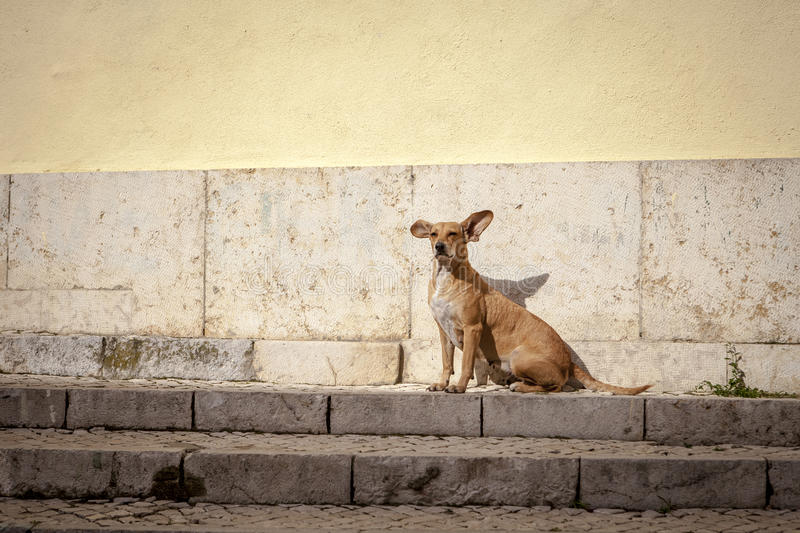 Dog on stairs stock images