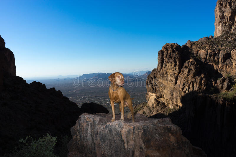 Dog standing on cliff in the superstition mounains arizona. Hiking with a dog in the Superstition wilderness area beside Phoenix Arizona is a popular activity stock photo