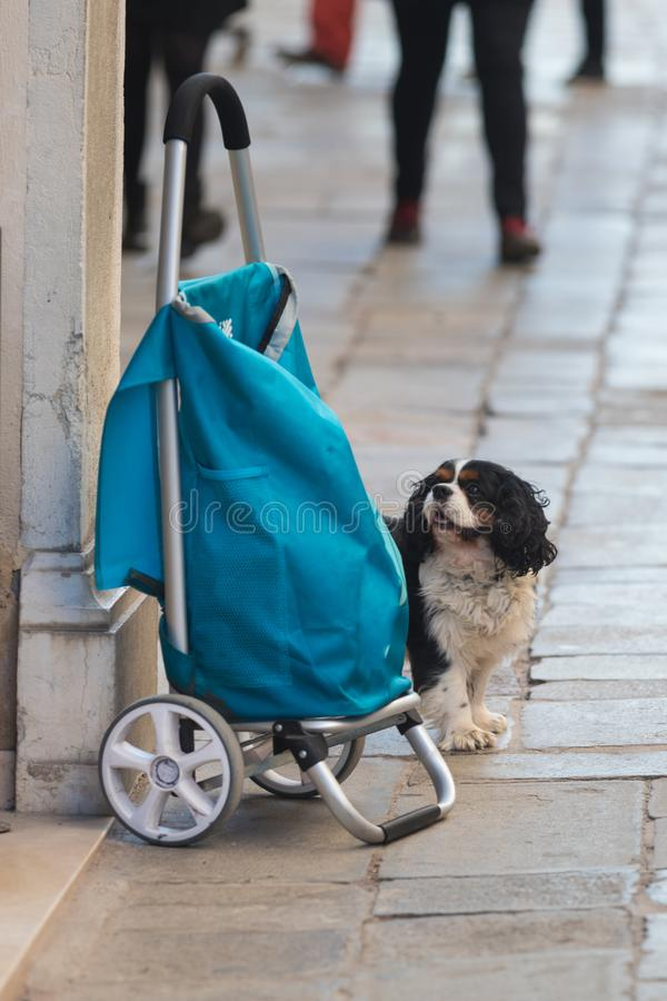 The dog is standing next to the bag on the street of Italy royalty free stock image