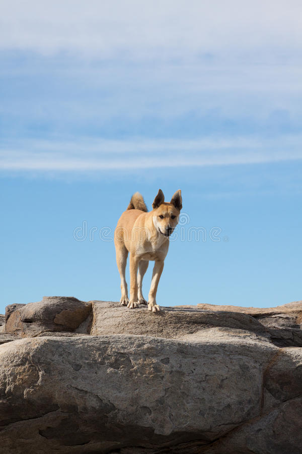 Dog standing on rocks. Blue sky in the background stock photography