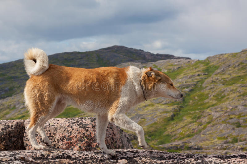 Dog standing on rocks. Mountains and sky in the background royalty free stock photos