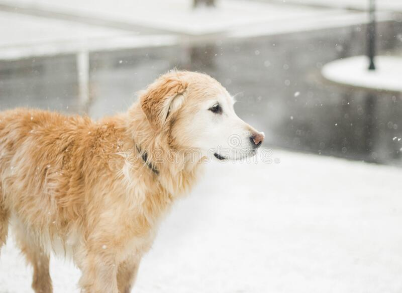Dog Standing In Snow Free Public Domain Cc0 Image